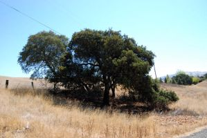Tree 1-Stock by Thorvold-Stock
