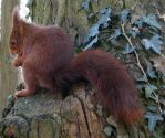 Wild animal 166- cute squirrel by Momotte2stocks