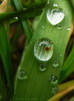 Drops on grass by Ranae490