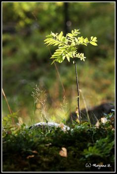 norway - little tree by moem-photography