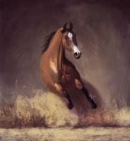 Horse study by z0h3