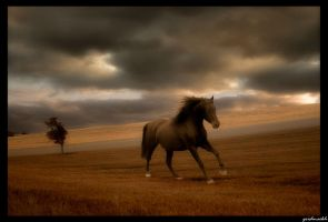 horse by SHUME-1