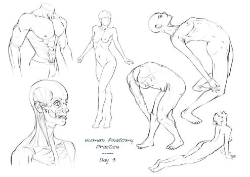 Anatomy Practice - Day 4 by Nixri