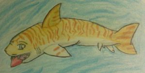 Chib's Tiger Shark by Dield