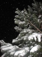 Snowy Tree Stock by SarahxJane-Stock