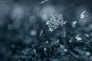 Snow Flake II by John77