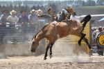 Taupo Rodeo 153 by Sooty-Bunnie