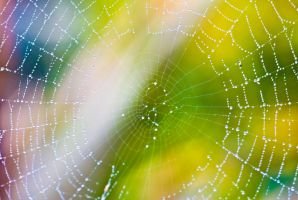 Web 2 by Quinnphotostock