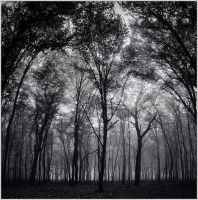 Forest 1 by mikeb79