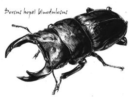 Japan Stag beetle by inubiko