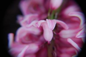 pink flowers_3 by detihw