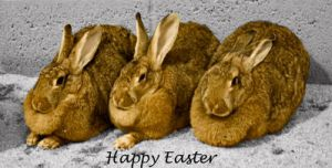 Happy Easter, easter bunnies by hchic4life