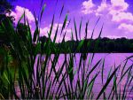 Lake Side Cat Tails by PridesCrossing