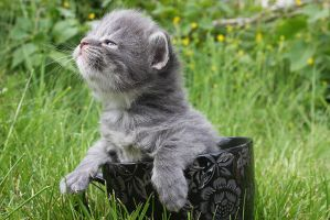 First day outdoors - no fear by novablue