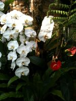 Drooping Orchids by september28