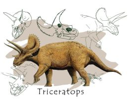 Triceratops by fotostomias