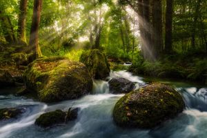 Deep Forest by StefanPrech