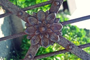 Rusted Rose by B9CC1D