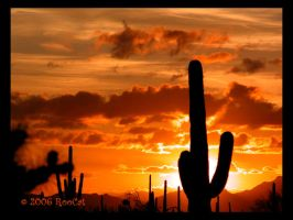 Early Spring Saguaro Sunset by RooCat