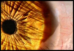 The Human Lens by FramedByNature