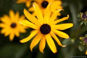 Yellow Flower by EaGle1337