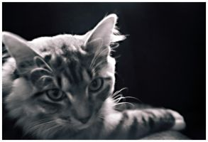 just a cat by ToNz0PhuN