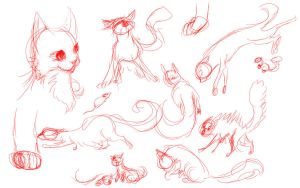 Cat Sketches by iamblossom