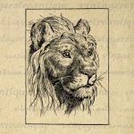 Antique Lion Digital Graphic No.445 by VintageRetroAntique