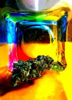 Colorful cannabis. by Andzhelika