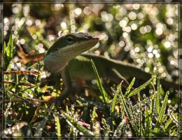 Green Anole 40D0027054 by Cristian-M