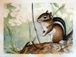 Chipmunk watercolour by Schnellart
