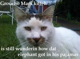 My first lolcatz by Trekkie-By-Birth