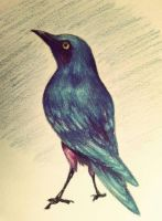 Starling Stare by Follyfoot