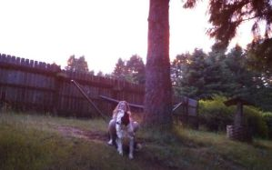 Me and My Dog at Sunset by MelchiorFlyer