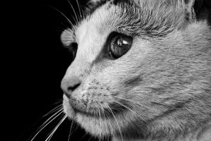 Through the eyes of a cat BW by Doroty86