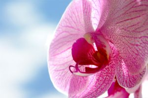 orchid by maKus-style