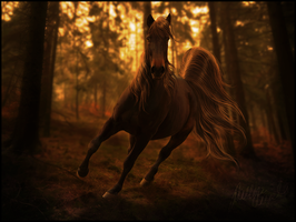 Wild Beauty by hp-fallenangel