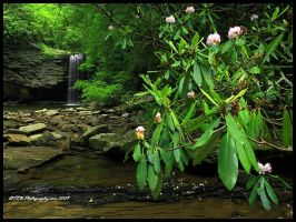 Rhodies at Little Stoney by TRBPhotographyLLC