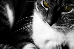 Bad Cat by db-photoblogDOTcom