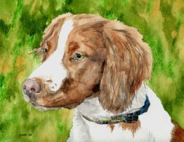 Brittany Spaniel by RamonaQ