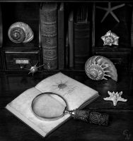 A Study In Shells by C-Novack