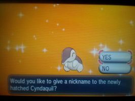 Shiny Cyndaquil Finally Hatched on X!!! by xMaikoWolfx