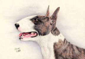 Bullterrier by ManiaAdun