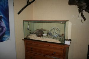 my new gerbil tank by nature-wanderer