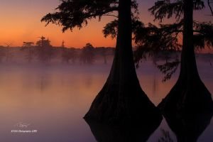 More from Reelfoot by TRBPhotographyLLC
