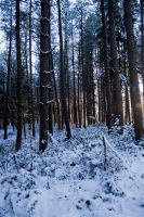 Snowy Woodland 17 by joannastar-stock