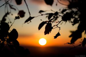 Leaf Sunset by fti7