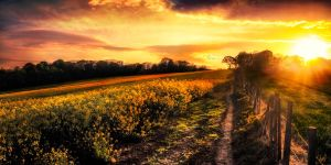 Spring Field Pano 3 by kyleparr