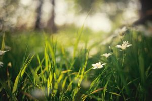 Green Grass Flowers by Freggoboy