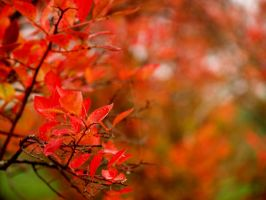 color of autumn by crazytmac